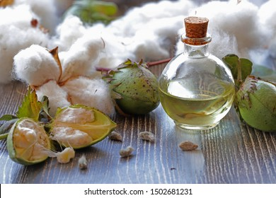 Cotton, cotton cocoon and cotton oil in bottle on wooden background.