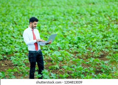 cotton field , India