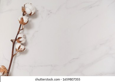Cotton flower branch on white marble background from above. Minimal layout