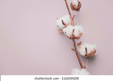 Cotton flower on pastel pale blue paper background, overhead. Minimalism flat lay composition for bloggers, artists, social media,  magazines. Copyspace, horizontal