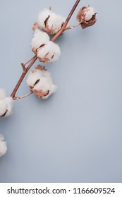 Cotton flower on pastel pale blue paper background, overhead. Minimalism flat lay composition for bloggers, artists, social media,  magazines. Copyspace, vertical