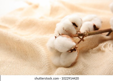 Cotton flowers on fabric, closeup