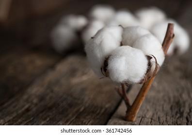 Cotton flowers on vintage wood board