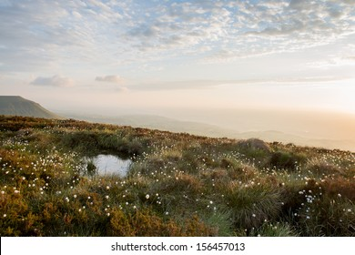 cotton grass on a mountain