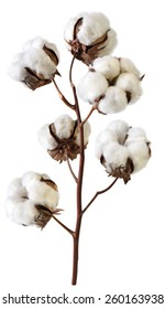 cotton isolated