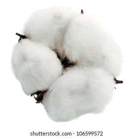 Cotton isolated on white background