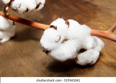 cotton isolated on wooden background