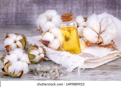Cotton plant ball and cotton oil