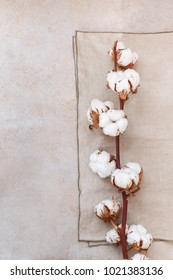 Cotton plant buds over rustic background. Top view, blank space