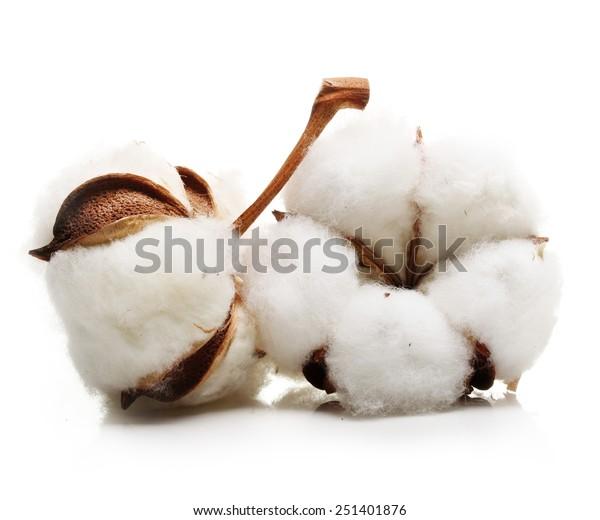 Puuvillakasvien hoito: Vinkkejä puuvillan kasvattamiseen lasten kanssa