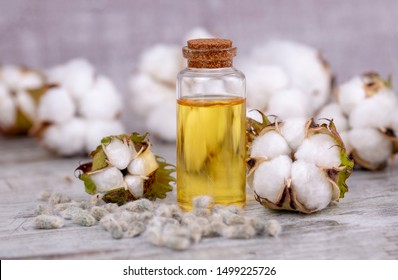 Cotton plant and cotton oil on the wooden background
