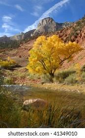 Cottonwood Tree Along River in Western Utah