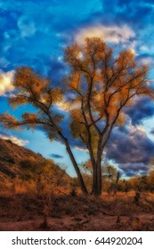 Cottonwood trees glows with golden autumn coors on the side of the Virgin river just outside Zions national park in Utah USA.