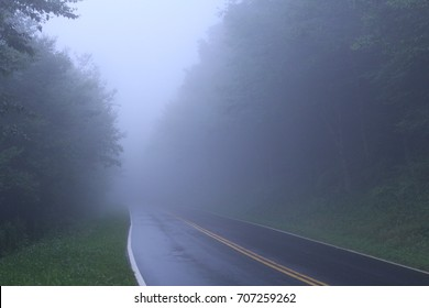 Coudy Day With Heavy Fog on Roads in the Deep Woods