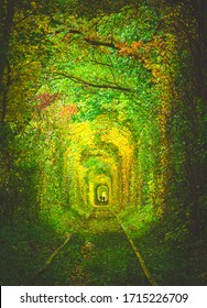 a coulpe is walking down the tunnel surounded by colorful nature with umbrelas.Tunnel of love.Ukraine
