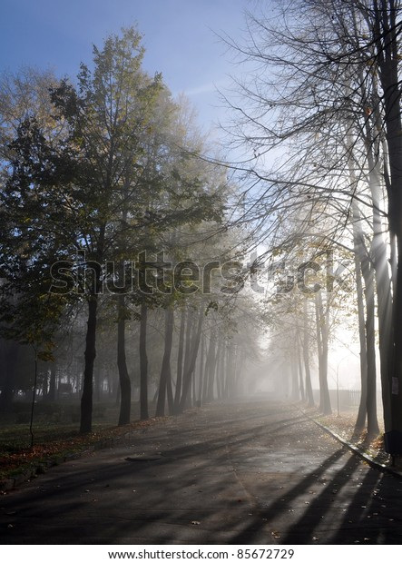 Country avenue on a foggy day