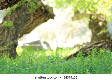 A country background backdrop with green plants and logs.
