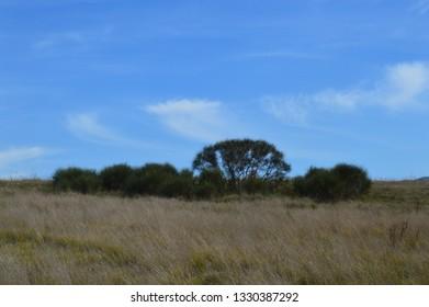 Country blue skies