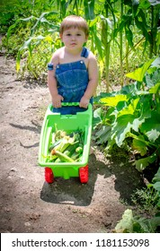 country boy with  toy wheel barrow full of corn