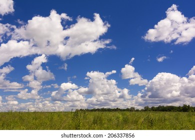 A country field of grasses against a beautiful white puffy cloud sky.