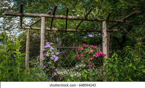 Country garden in spring with rustic wood trellis supporting purple and red clematis on an early spring morning