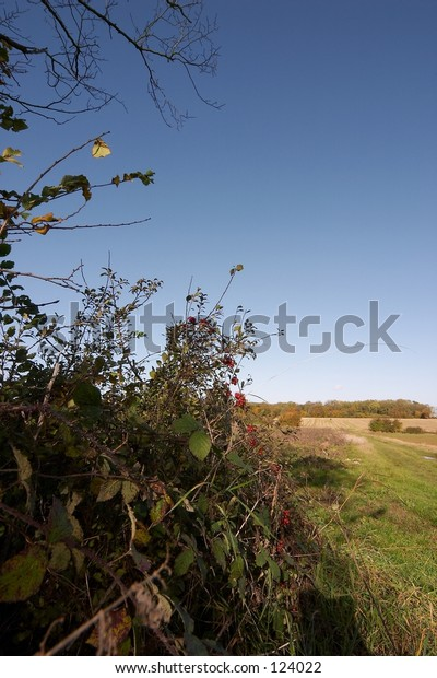 country hedge