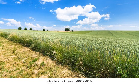 country landscape - edge of green wheat field in Picardy region of France in summer day
