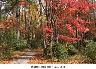 Country Lane In Autumn, Chester County Pennsylvania