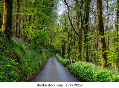 A country lane at Duloe in Cornwall lined with bluebells and wild garlic