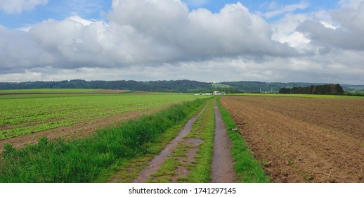 Country lane and field, springtime