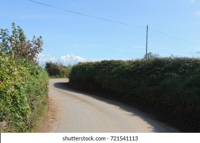 A country lane near Looe in Cornwall