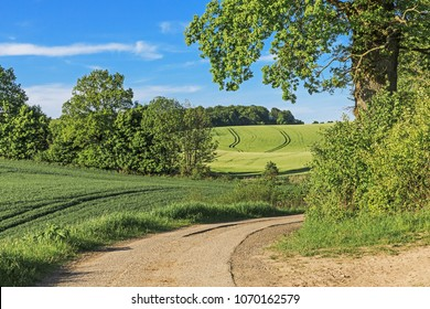Country lane running through agricultural landscape with wheat and barley fields, trees and shrubs in Schleswig-Holstein, Germany.