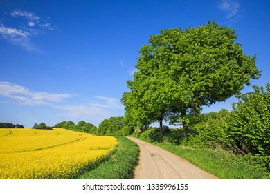 Country lane running through agricutural landscape in spring with a canola field, a hedgerow and oaks in Schleswig-Holstein, Germany