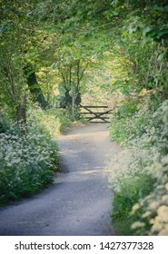country lane with wild flowers and gate in spring