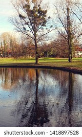 Country panorama: Tree full of misletoe near a lake with water mirror reflection