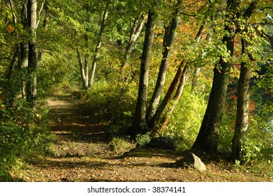 Country path through a dense forest