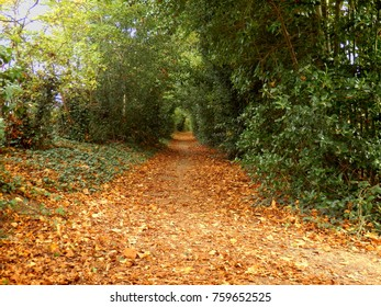 A country pathway in Autumn, disappearing into the woodland