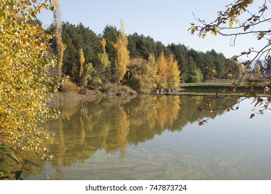 Country pond surrounded by colorful trees on a fall day in the northwest