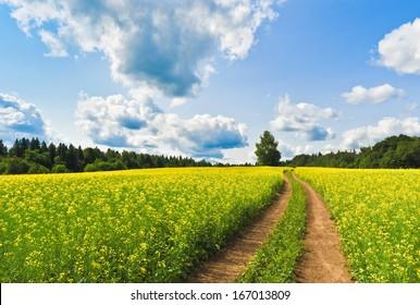 Country road across rape field