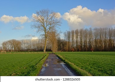 Country road along a green meadow with rows of bare poplars and ash trees in the Flemish countryside in Oude Kale nature reserve on a winter day
