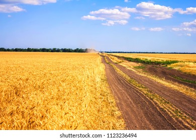 a country road along a wheat field