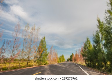 Country road with beautiful nature.