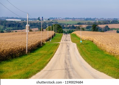Country road between cornfields on a sunny morning early in autumn, southwestern Wisconsin, USA, for rural, agricultural, and travel themes