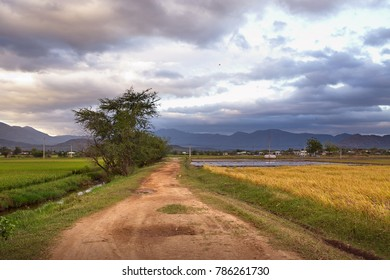 Country road between rice field at Ninh Thuan province, Vietnam