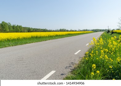Country road with blossom rape seed fields by road side at the island Oland in Sweden