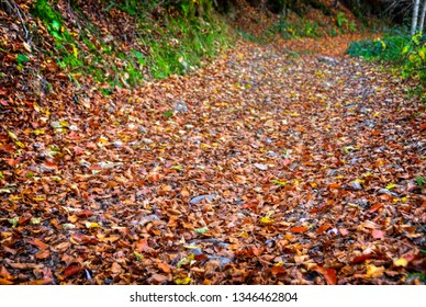 Country road covered by fallen red-orange leaves. Autumn background.
