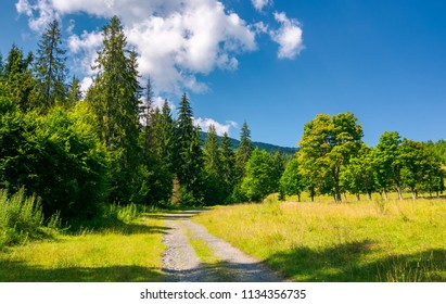 country road in to the deep spruce forest lovely nature scenery in summer. travel by car concept