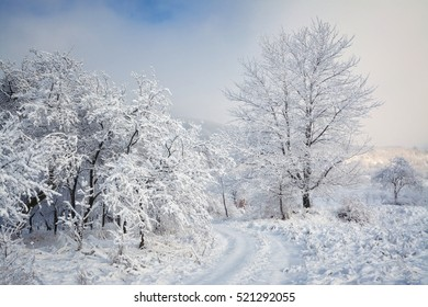 Country road in the field and trees covered with fluffy fresh snow.