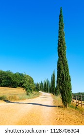 country road flanked with cypresses near Massa Marittima in Tuscany, Italy