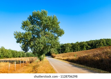 country road flanked with trees near Massa Marittima in Tuscany, Italy